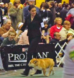 Pelee Bulldogs | Champion Bulldog Breeder Ontario Canada | Arrow Show