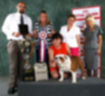 Pelee Bulldogs | Breed Conformation | Marshall
