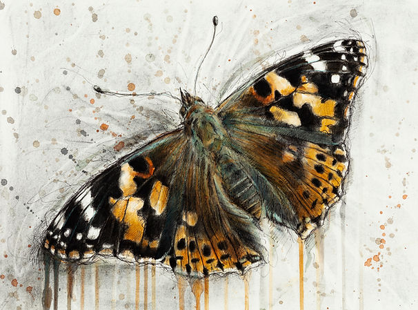 The Painted Lady.jpg