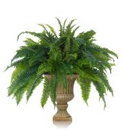 Fern in decorative urn