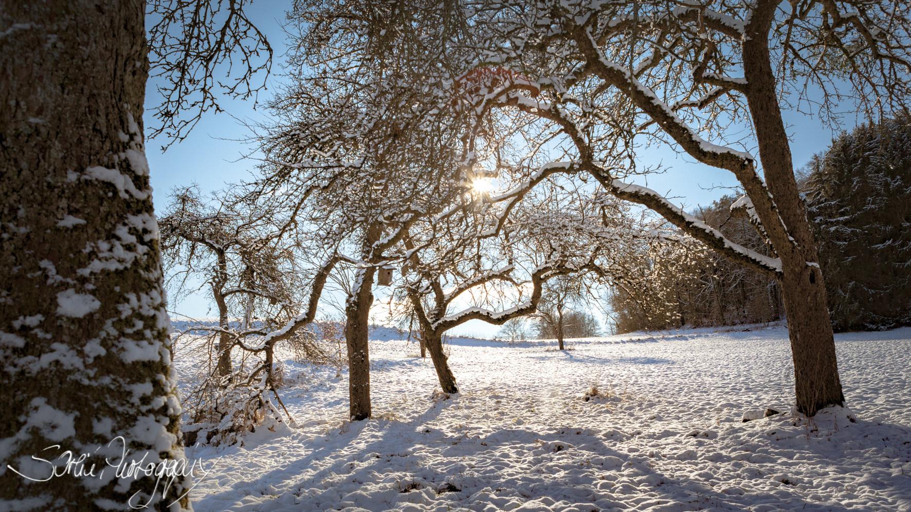 IMG_5037 b Winterkünstler_.JPG