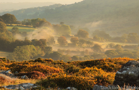 Mist and mellow fruits - Emsworthy Mire