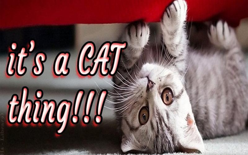 cat thing.jpg