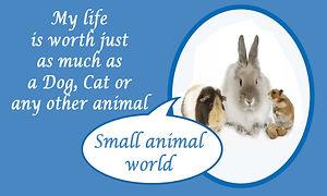 small animal.jpg