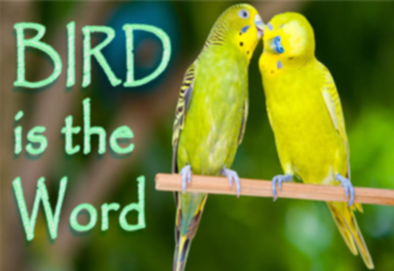 Bird is the word.jpg