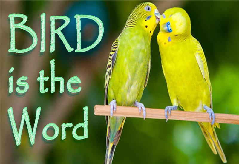 Bird is the word.jpg