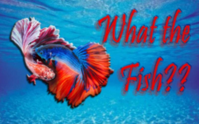 fishie.jpg