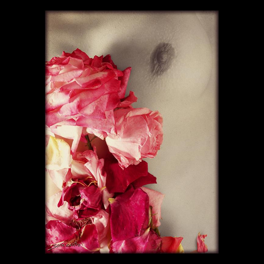 FINE ART - FOTOART1960 - ARMONIA