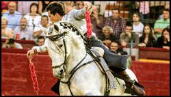 web caballos 12