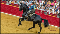 web caballos 08