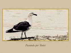 VENICE 019
