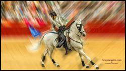 web caballos 07
