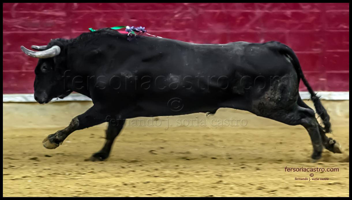 TORO BRAVO 13