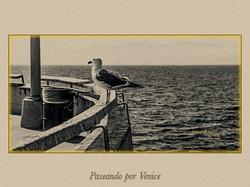 VENICE 045