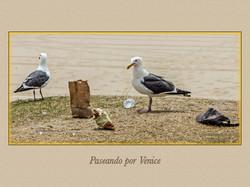 VENICE 013