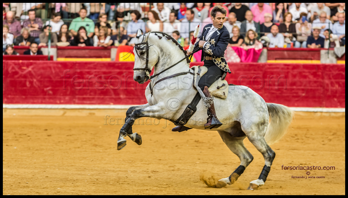 web caballos 02