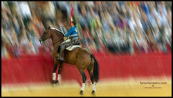 web caballos 06