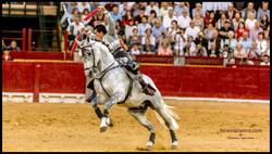 web caballos 13