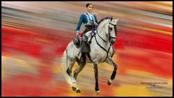 web caballos 01