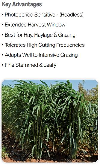 Trudan Grass 2.PNG