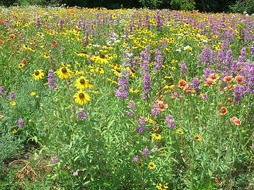 Anderson Midwest Wildflower Mix.jpg