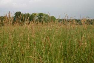 short prairie grass mix.jpg
