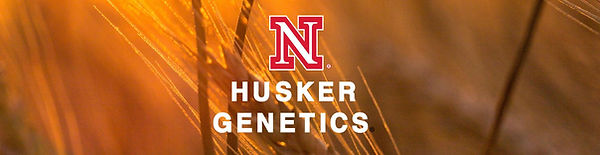 Husker Genetics Logo.jpg