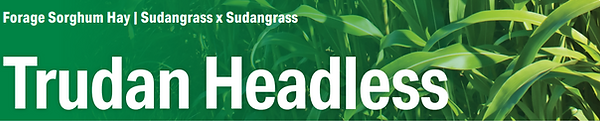 Trudan Grass.PNG