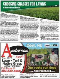 Choosing Grasses for Lawns in NE and KS.