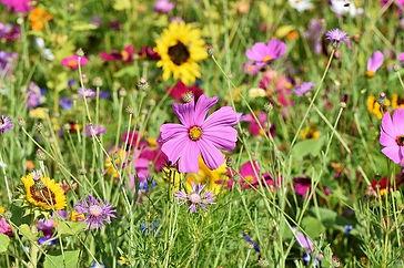 flower-meadow-3598561_640.jpg