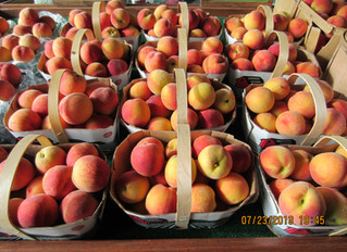 Peaches Galore