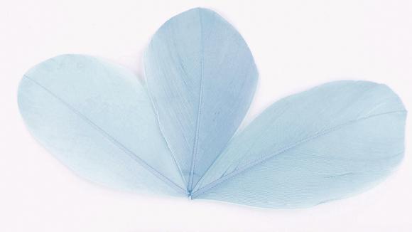 96 Plumes feuilles Bleues