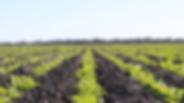 Yarranlea Farms, Forbes.webp