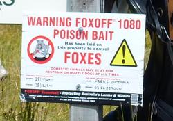 fox-bait-1