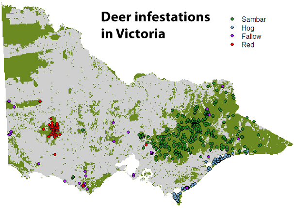 deer infestations in australia