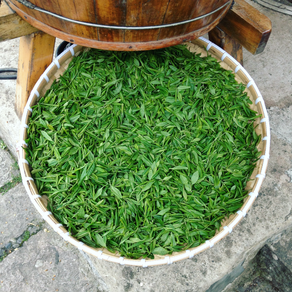 Séchage du thé vert