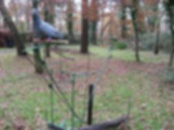 mecanique pour appelant vivant chasse palombe