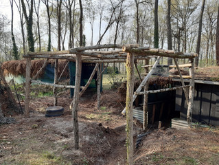 palombe.org Travaux de reconstruction de la palombière après la tempête du 6 mars 2020