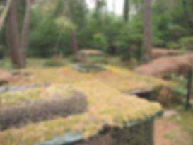 Chasse à la palombe en palombière dans le Sud-Ouest