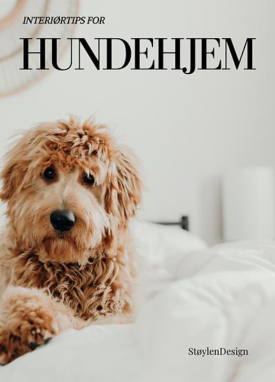 Interiørtips for hundehjem