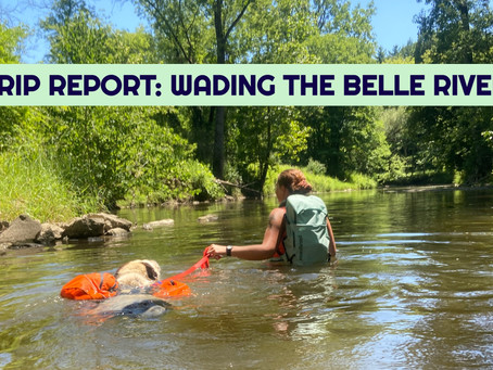 Wading the Belle River