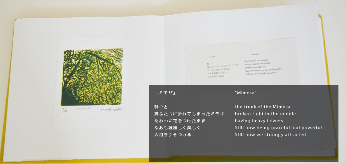 """Mimosa"""
