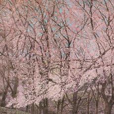 My Spring I