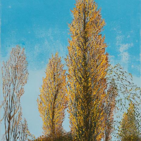 Poplars beside Lake