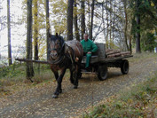 This guy rode past me while I was making a hike in a new area of Broumovsko.