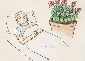 Geranium in a pandemic