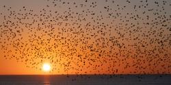 Brighton Starlings - 2020