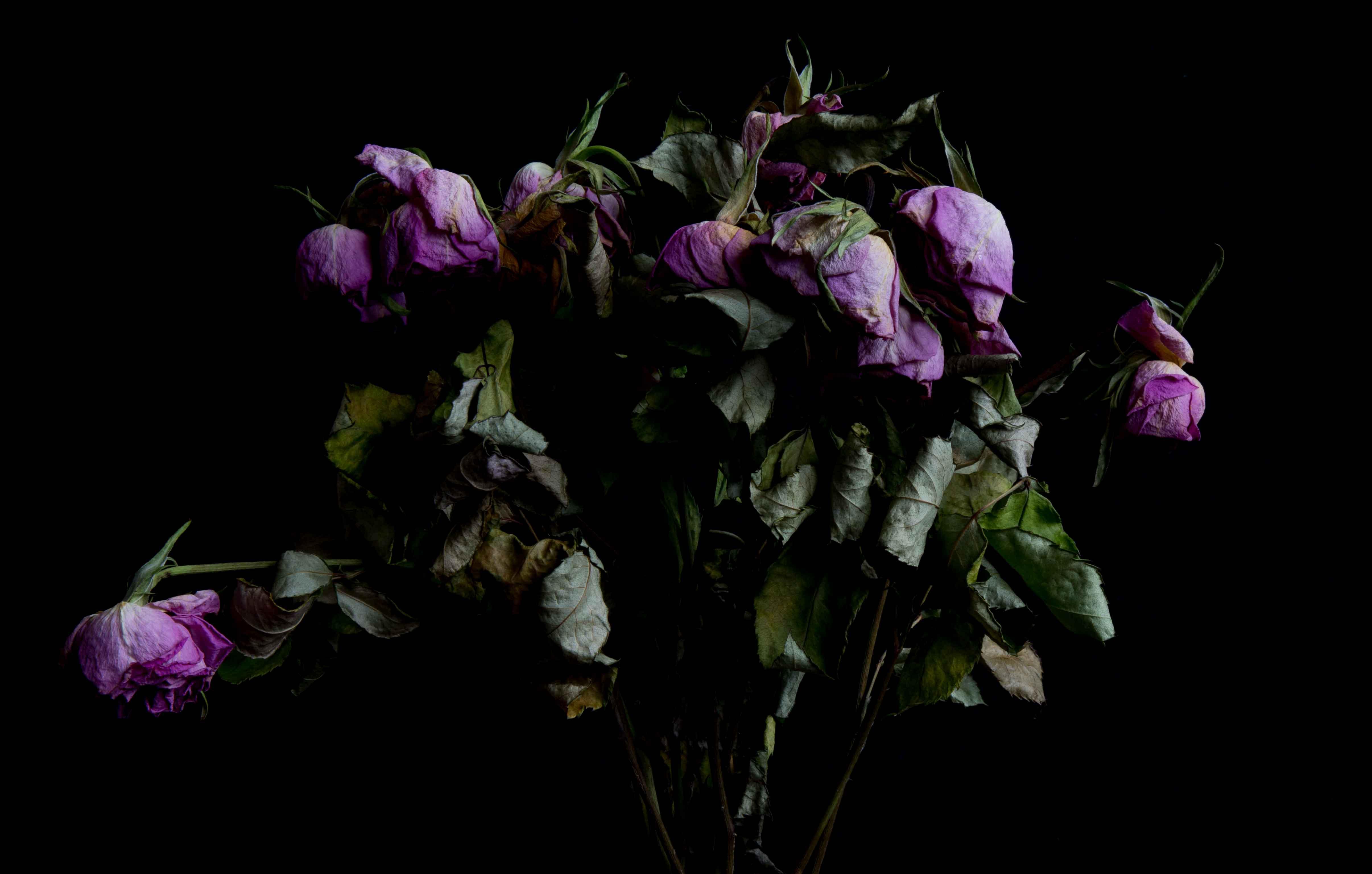 Roses - November 2017