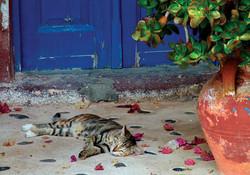 Greek Cat Resting