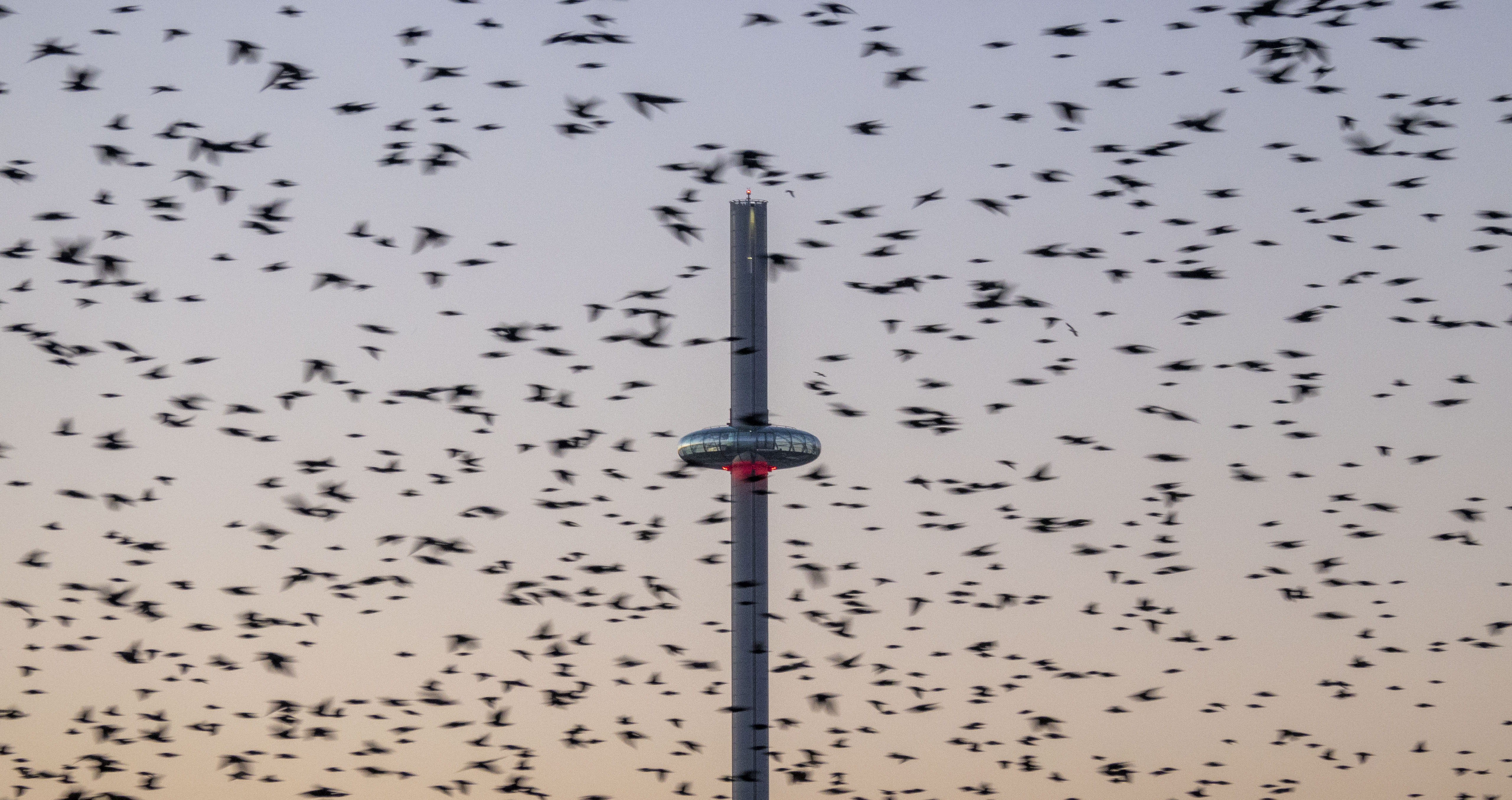 Starlings & the Brighton i360 - 2020